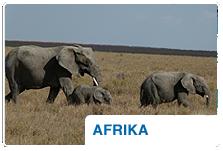 Rundreise Afrika  Teaser