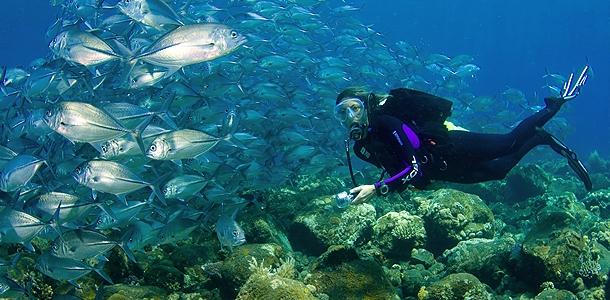 Bali -Unterwasserwelt © Tauch Terminal