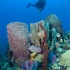 Dominica -   Unterwasserwelt © Buddy Dive