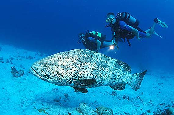 Tauchplätze Marsa Alam Elphinstone Reef ägypten Marsa Alam