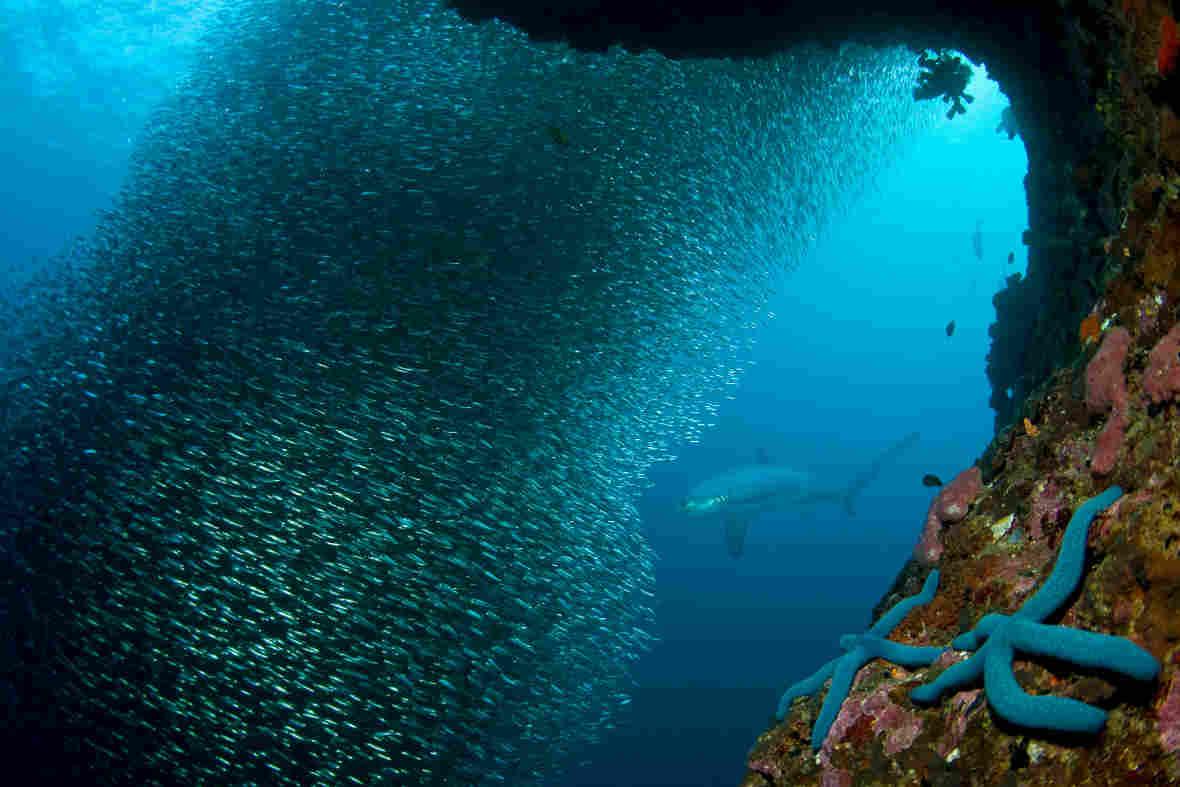 Magic Island Dive Center