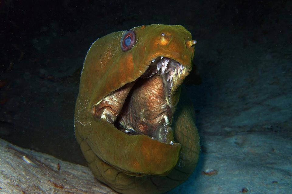 Yucatek Divers