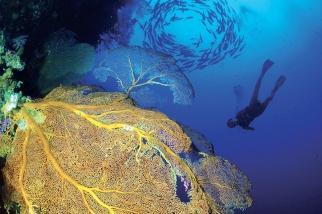 Mikronesien - Palau - Unterwasserwelt