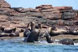 Baja California - The Cortez Club - Seelöwen