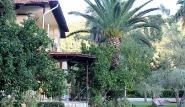 Lefkada - Villa Angela, Palmen im Garten