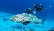 Marsa Alam -  Unterwasserimpressionen by Udo Kefrig, Orca Dive Clubs (1)