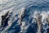 Cebu  -  Dolphin House, Unterwasser