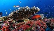 Malediven - MY Amba, Unterwasserwelt© Josef Hochreiter