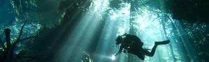 Yucatan - Unterwasser © Pro Dive