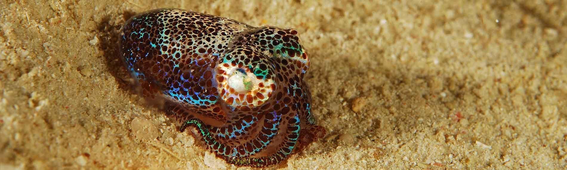 © Dugong Dive Center