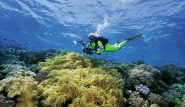 Süd-Sulawesi - Taucher