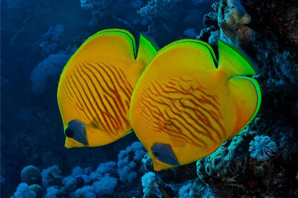 Hurghada Unterwasserwelt