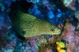 Kapverden - Unterwasser © Eco Dive