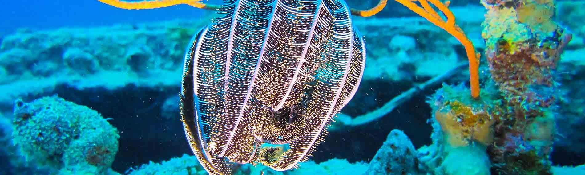 © Orca Dive Club