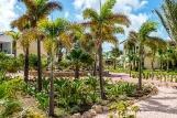 Bonaire - Delfins Beach Resort - Gartenblick