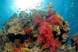 Ägypten - Dahab - Lagona Divers Nord