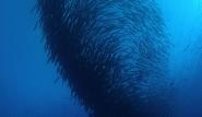 Kalimantan - Unterwasserwelt © Nabucco Island Resort