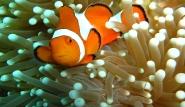 Indonesien -  Unterwasserwelt by ORCA Dive ©