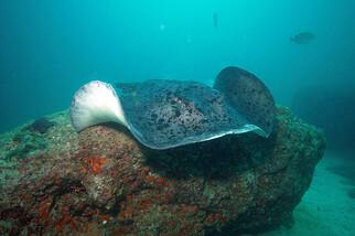 Mirbat Unterwasserimpressionen © Extra Divers, Barney