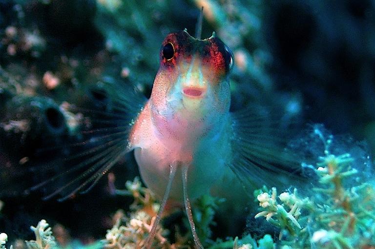 Türkei - MSY Okyanus,  Unterwasserwelt © jdive