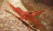 Marsa Alam - Unterwasserwelt