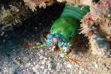 Gangga Island Unterwasserwelt