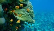 Pemba - The Manta Resort,  Unterwasserwelt