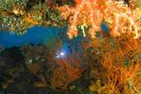 Bali - TauchTerminal - Unterwasser