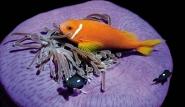 Malediven - Unterwasserimpressionen