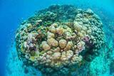 Tansania Pemba Unterwasserwelt © Manta Resort -  Local Coral Reef