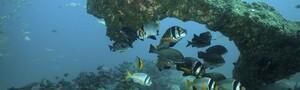 Mirbat - Unterwasser © Nicolas Pohl, Extra Divers