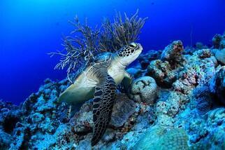 Palau Unterwasserwelt by Siren © Gerald Rambert