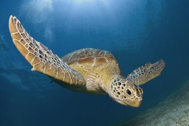 Unterwasserwelt Bohol