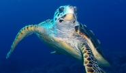 Ägypten - Schildkröte