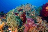 Philippinen - Bohol - Magic Oceans Dive Resort - farbenfrohe Riffe