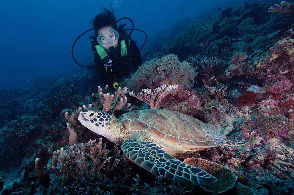 Kalimantan - Schildkröte