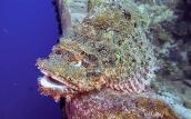 Unterwasserwelt El Gouna   © ORCA Dive Club