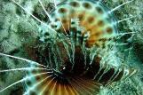 Zanzibar - Unterwasserwelt © East Africa Diving