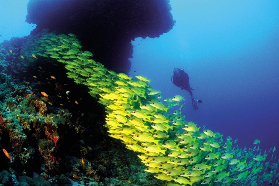 Malediven - Unterwasserwelt