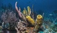 Tobago - Unterwasserwelt © Stephan Klotz