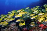 Mafia Island - Unterwasserwelt