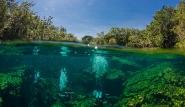 Mexiko  Unterwasserwelt © Pro Dive