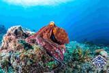 Kenia - Diana Beach - The Crab - Oktopus