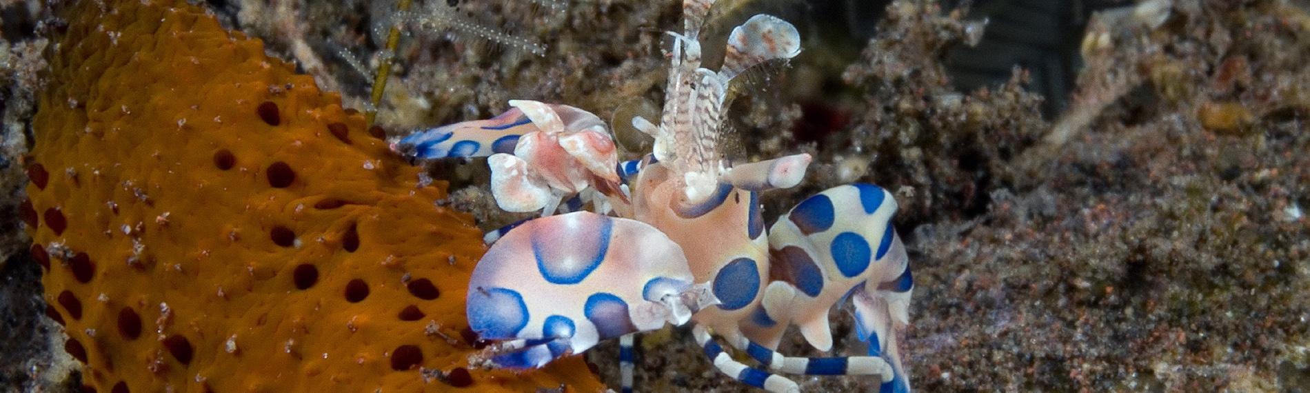 © Gangga Divers