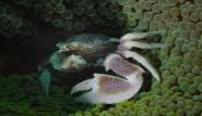 Bali - Krabbe by Werner Lau