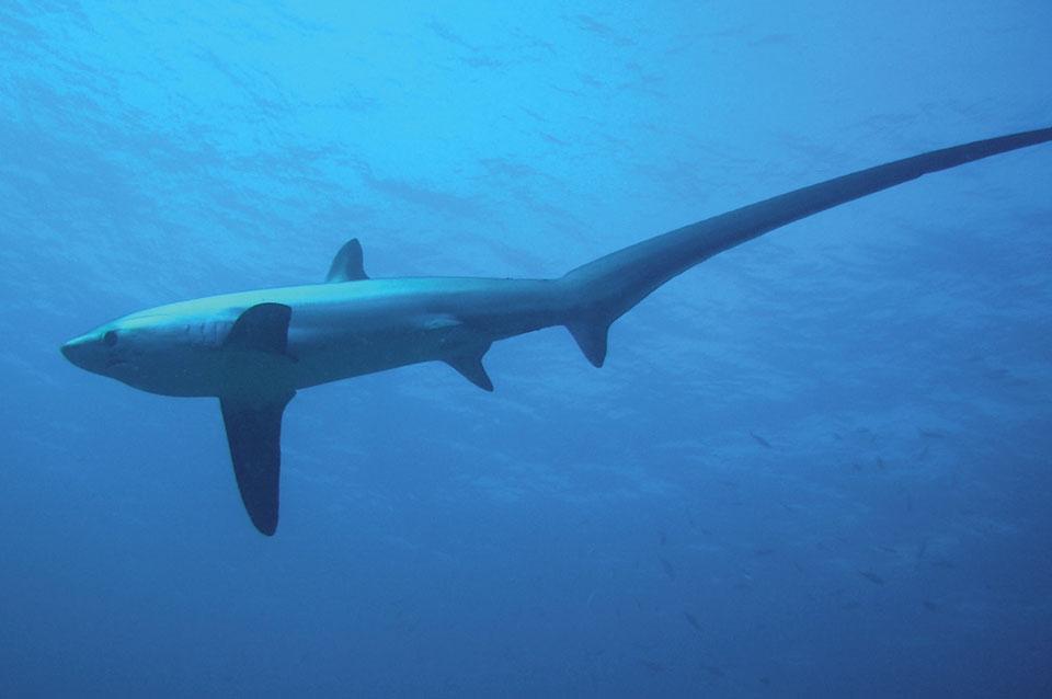 Malapascua - Unterwasserimpressionen