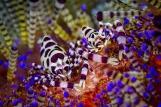 Lembeh Resort Unterwasserleben