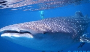Mirbat Unterwasserimpressionen © Extra Divers, C Mara