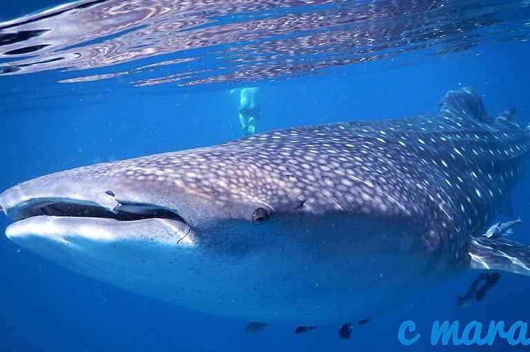 Oman Mirbar Unterwasserimpressionen © Extra Divers, C Mara