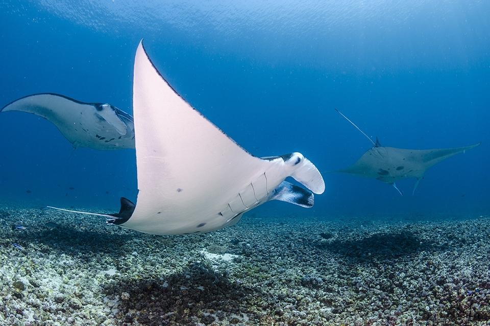 Flores Unterwasser © Orca Dive Club